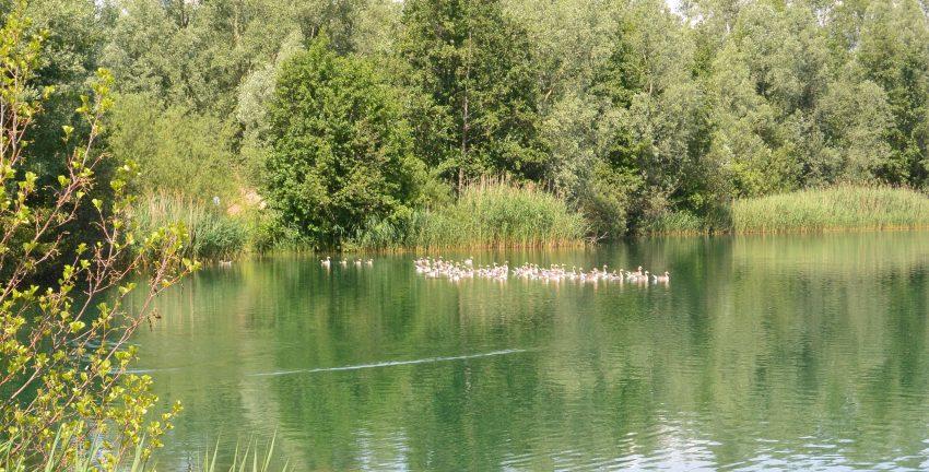 het waterrijk